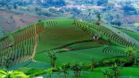 Καταπληκτικό αγρόκτημα κρεμμυδιών πεζουλιών σε Argapura Majalengka στοκ εικόνα