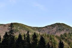 Καταπληκτικό δάσος πεύκων Στοκ Εικόνες