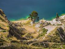 Καταπληκτικό δέντρο κατά μήκος της ακτής λιμνοθαλασσών Quilotoa, ηφαιστειακή λίμνη κρατήρων στον Ισημερινό Στοκ Φωτογραφία