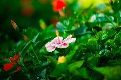 Καταπληκτικό κόκκινο λουλούδι που στέκεται μόνο σε έναν μικροσκοπικό κλάδο Στοκ Εικόνες