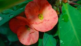 Καταπληκτικό λουλούδι με το συμπαθητικό φυσικό υπόβαθρο στοκ φωτογραφίες
