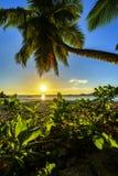 Καταπληκτικό ρομαντικό ηλιοβασίλεμα με έναν φοίνικα στον παράδεισο, Σεϋχέλλες beac Στοκ φωτογραφία με δικαίωμα ελεύθερης χρήσης