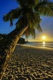 Καταπληκτικό ρομαντικό ηλιοβασίλεμα με έναν φοίνικα στον παράδεισο, Σεϋχέλλες beac Στοκ εικόνες με δικαίωμα ελεύθερης χρήσης