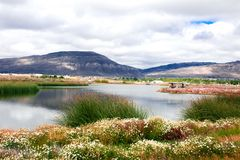 Καταπληκτικό τοπίο με μια λίμνη σε Calafate, Αργεντινή, Παταγωνία Στοκ Εικόνα