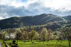 Καταπληκτικό τοπίο με την πράσινους χλόη, τους λόφους και τα δέντρα, νεφελώδης ουρανός στοκ εικόνες