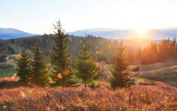 Καταπληκτικό τοπίο πρωινού φθινοπώρου στα βουνά με το λιβάδι και τα ζωηρόχρωμα δέντρα στο κατάχαμα πρώτου πλάνου και ομίχλης εθνι Στοκ φωτογραφία με δικαίωμα ελεύθερης χρήσης