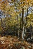 Καταπληκτικό τοπίο φθινοπώρου με την κίτρινη κοντινή πόλη διαβόλων στο βουνό Radan Στοκ εικόνες με δικαίωμα ελεύθερης χρήσης