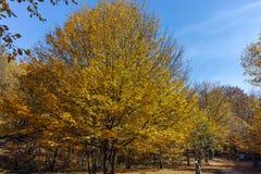 Καταπληκτικό τοπίο φθινοπώρου με την κίτρινη κοντινή πόλη διαβόλων στο βουνό Radan Στοκ φωτογραφίες με δικαίωμα ελεύθερης χρήσης