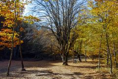Καταπληκτικό τοπίο φθινοπώρου με την κίτρινη κοντινή πόλη διαβόλων στο βουνό Radan Στοκ Φωτογραφία