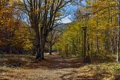 Καταπληκτικό τοπίο φθινοπώρου με την κίτρινη κοντινή πόλη διαβόλων στο βουνό Radan Στοκ Εικόνες