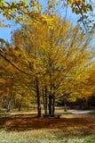 Καταπληκτικό τοπίο φθινοπώρου με την κίτρινη κοντινή πόλη διαβόλων στο βουνό Radan Στοκ εικόνα με δικαίωμα ελεύθερης χρήσης
