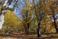 Καταπληκτικό τοπίο φθινοπώρου με την κίτρινη κοντινή πόλη διαβόλων στο βουνό Radan Στοκ Φωτογραφίες