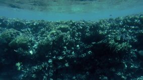 Καταπληκτικό υποβρύχιο βίντεο 4k της υποβρύχιας ζωής γύρω από την κοραλλιογενή ύφαλο Όμορφη φύση της Ερυθράς Θάλασσας απόθεμα βίντεο