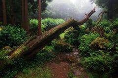 Καταπληκτικό υποτροπικό βαθύ δάσος κοντά σε Poço DA Alagoinha σε μια ομιχλώδη ημέρα Στοκ φωτογραφία με δικαίωμα ελεύθερης χρήσης