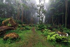 Καταπληκτικό υποτροπικό βαθύ δάσος κοντά σε Poço DA Alagoinha σε μια ομιχλώδη ημέρα Στοκ φωτογραφίες με δικαίωμα ελεύθερης χρήσης