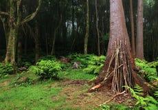 Καταπληκτικό υποτροπικό βαθύ δάσος κοντά σε Poço DA Alagoinha σε μια ομιχλώδη ημέρα Στοκ εικόνες με δικαίωμα ελεύθερης χρήσης