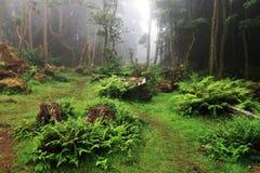 Καταπληκτικό υποτροπικό βαθύ δάσος κοντά σε Poço DA Alagoinha σε μια ομιχλώδη ημέρα Στοκ εικόνα με δικαίωμα ελεύθερης χρήσης