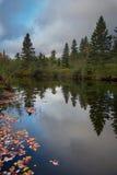 Καταπληκτικά πεύκα και οι αντανακλάσεις ποταμών τους στοκ εικόνες με δικαίωμα ελεύθερης χρήσης