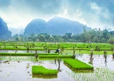 Καταπληκτική άποψη πανοράματος των τομέων ρυζιού, των βράχων ασβεστόλιθων και του MO Στοκ Φωτογραφία