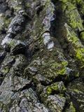 Καταπληκτική κινηματογράφηση σε πρώτο πλάνο σύστασης δέντρων Στοκ Εικόνες