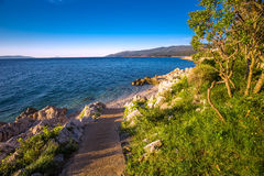 Καταπληκτική παραλία με το crystalic καθαρό θαλάσσιο νερό με τα δέντρα πεύκων, Istria, Κροατία Στοκ Εικόνες