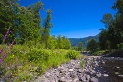Καταπληκτική φυσική φύση θερινών τοπίων στην περιοχή φαραγγιών της Κολομβίας Στοκ Εικόνες