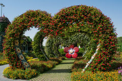 Καταπληκτική όμορφη πράσινη αλέα καρδιών που γίνεται από τα λουλούδια στον κήπο Στοκ Φωτογραφία