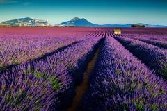 Καταπληκτικοί lavender τομείς στην Προβηγκία, Valensole, Γαλλία, Ευρώπη στοκ εικόνες