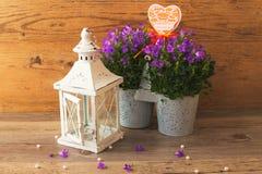 Καταπληκτικός λαμπτήρας κηροπηγίων και όμορφα λουλούδια campanula Στοκ Φωτογραφία