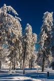 Καταπληκτικός χειμώνας Στοκ φωτογραφίες με δικαίωμα ελεύθερης χρήσης