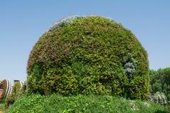 Καταπληκτικός όμορφος πράσινος στρογγυλός λόφος που γίνεται από τα λουλούδια στον κήπο Στοκ Εικόνες