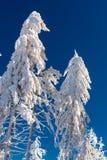 Καταπληκτικό δέντρο χιονιού Στοκ εικόνες με δικαίωμα ελεύθερης χρήσης