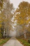 Καταπληκτικό πανόραμα φθινοπώρου με τις σημύδες κατά μήκος του τρόπου, Vitosha βουνό, Βουλγαρία Στοκ Φωτογραφία