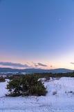 Καταπληκτικό πορφυρό χειμερινό ηλιοβασίλεμα με τον ιουνίπερο και ένα ημισεληνοειδές φεγγάρι στον ουρανό Ρωσία, Stary Krym Στοκ εικόνα με δικαίωμα ελεύθερης χρήσης