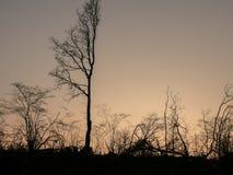 Καταπληκτικό δραματικό ηλιοβασίλεμα πέρα από το τοπίο με την όμορφη σκιαγραφία των νέων δέντρων Στοκ φωτογραφίες με δικαίωμα ελεύθερης χρήσης