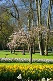 Καταπληκτικό τοπίο με τα ζωηρόχρωμα κρεβάτια λουλουδιών και τα σχέδια λουλουδιών Στοκ Εικόνα