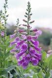Καταπληκτικό υπόβαθρο λουλουδιών στο φεστιβάλ λουλουδιών Στοκ φωτογραφίες με δικαίωμα ελεύθερης χρήσης