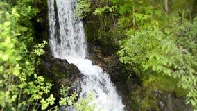 Καταπληκτικό 4k σταθερό άγριο τοπίο φύσης που βλασταίνεται του μικρού καταρράκτη ποταμών που τρέχει στο πράσινο δάσος απότομων βρ απόθεμα βίντεο