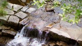 Καταρράκτης, ένας μικρός αλπικός κολπίσκος βουνών, ποταμός σαφές, καθαρό, πόσιμο νερό θερινή ημέρα, στο δάσος, απόθεμα βίντεο