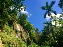 Καταρράκτης και βασιλικός φοίνικας στη ζούγκλα της Κούβας Στοκ εικόνα με δικαίωμα ελεύθερης χρήσης