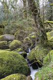 Καταρράκτης και mossy βράχοι στις πτώσεις της Becky, Devon Στοκ φωτογραφίες με δικαίωμα ελεύθερης χρήσης