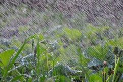 Καταρράκτης (μεγάλη βροχή) Στοκ Φωτογραφίες