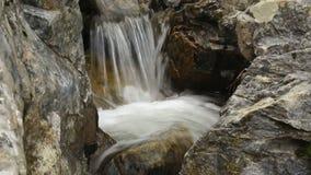 Καταρράκτης ποταμών βουνών στο δάσος απόθεμα βίντεο