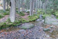 Καταρράκτης στη μικρή λίμνη Arber, Βαυαρία, Γερμανία Στοκ φωτογραφίες με δικαίωμα ελεύθερης χρήσης