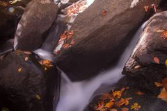 Καταρράκτης στο δάσος φθινοπώρου στοκ εικόνα