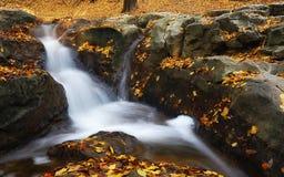 Καταρράκτης στο δάσος φθινοπώρου Στοκ εικόνες με δικαίωμα ελεύθερης χρήσης