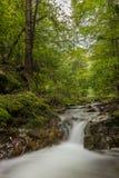 Καταρράκτης στο δάσος Στοκ Φωτογραφία