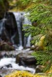 Καταρράκτης στο δάσος Στοκ εικόνες με δικαίωμα ελεύθερης χρήσης