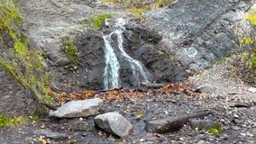 Καταρράκτης στο δάσος φθινοπώρου με τα κίτρινα φύλλα στο έδαφος απόθεμα βίντεο