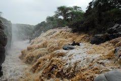 Καταρράκτης στο εθνικό πάρκο Awash, Αιθιοπία στοκ εικόνες